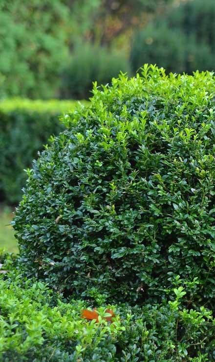 Alrick's Landscaping, LLC Shrubs & Hedges