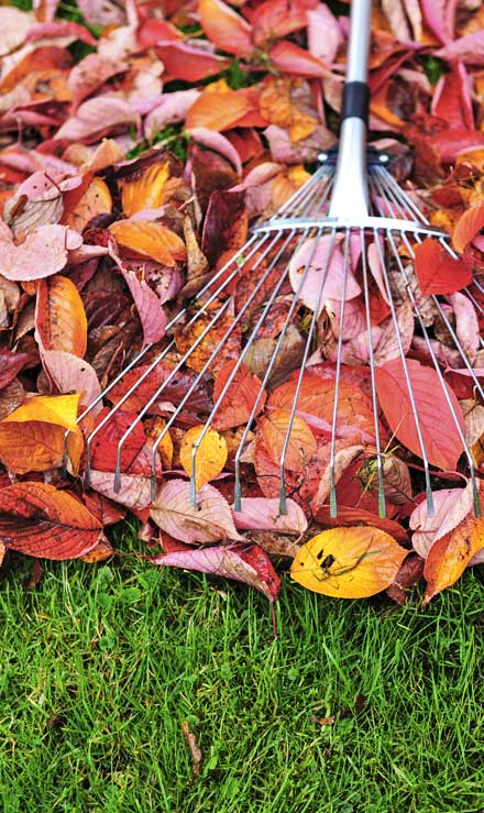 Alrick's Landscaping, LLC Fall Clean Up